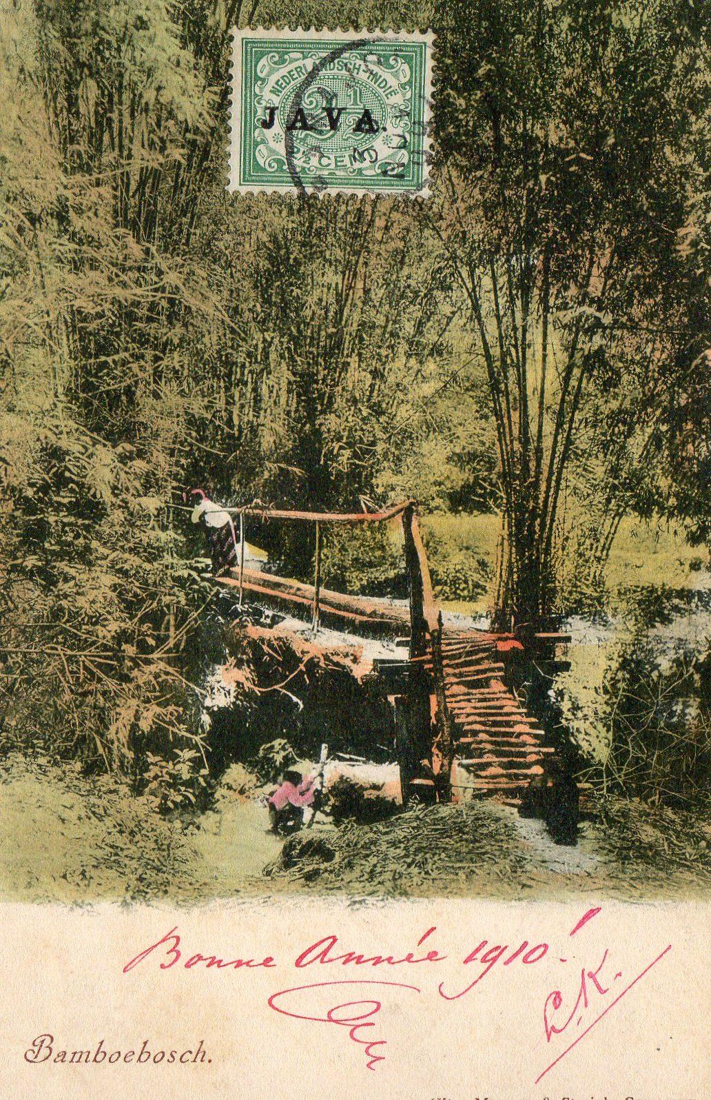 Bambusbor i Junglen